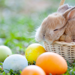Frohe Ostern!!!!!!!!!!